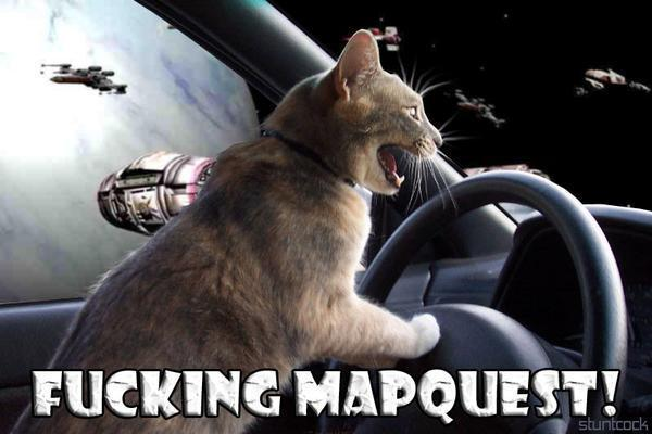 kitty driving